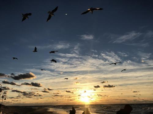 Mewy i zachód słońca